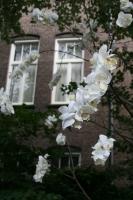 plastic flowers, dead tree.