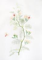 100 x 70 cm. Watercolour