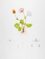 90.5 x 68.5 cm Watercolour, pencil