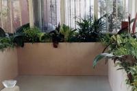 Plants, wood, heat, water
